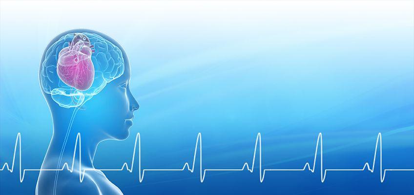 Heart Brain Interactions Body Mind Spirit Brain Connections