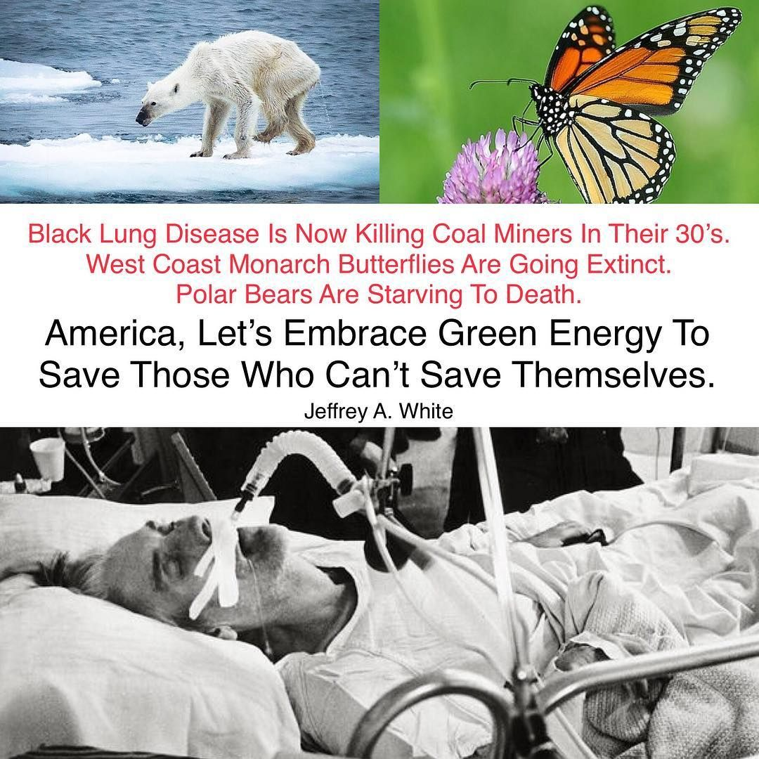 Pin On Save Our Planet And The Animals From (humans