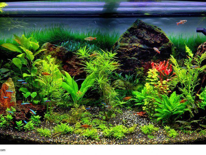 Aquarium Einrichten Aquarium Fresh Water Water