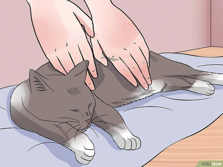 How to perform cpr on a cat 14 steps with pictures