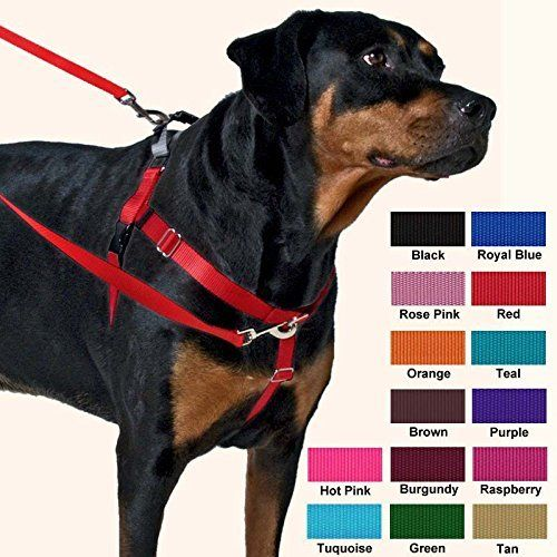 Freedom No-Pull Harness ONLY: 9 Colors, 7 Sizes * Stop everything and read more details here! : Dog stuff