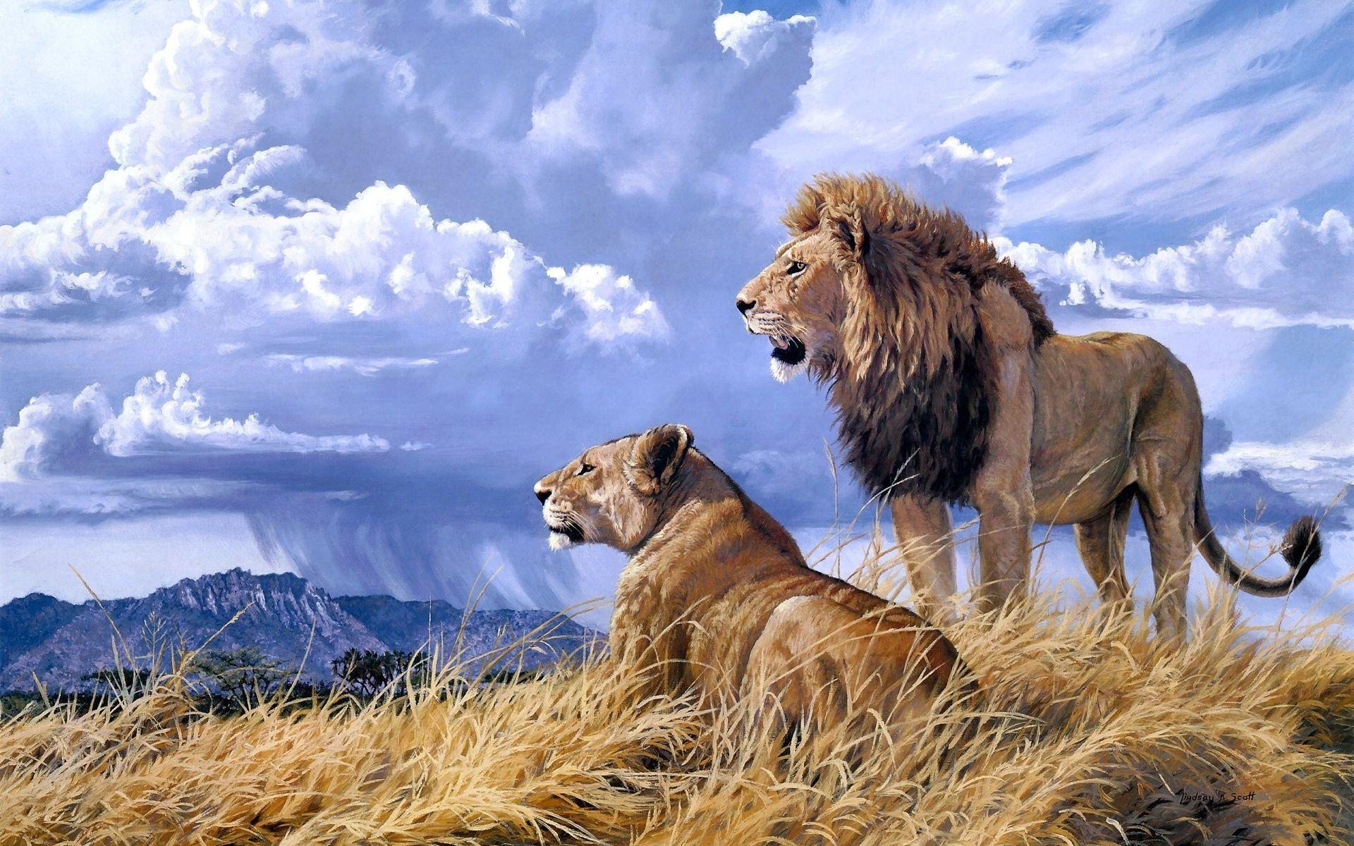 Beautiful Nature And Animal Wallpaper Lion Wallpaper Lion Couple Lion Hd Wallpaper