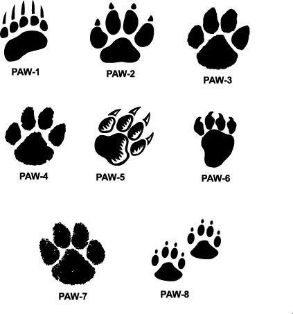 Tiger Paw Prints Walking Drawing