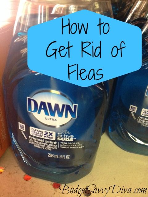 How to get rid of fleas on cats with dawn