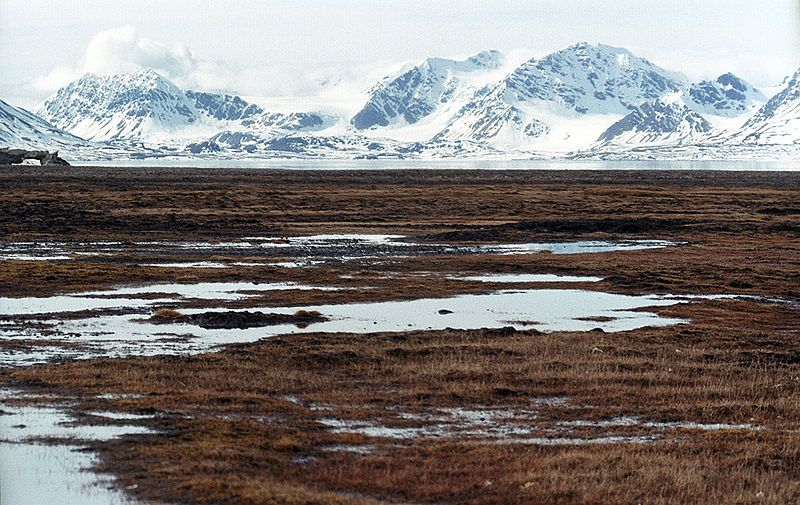 A major threat to the tundra biome is the melting of permafrost ...