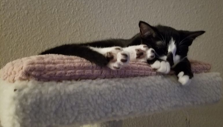 Tuxedo Toe Beans Anyone Teelast Com Cat Care Toe Beans Cats
