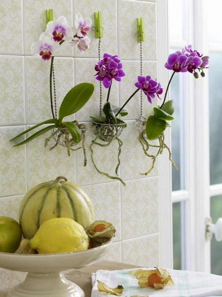 35 Exciting Diy Hanging Orchids Ideas Diyhomedecor Diycrafts Diyjewelry Hanging Orchid Growing Orchids Hanging Plants