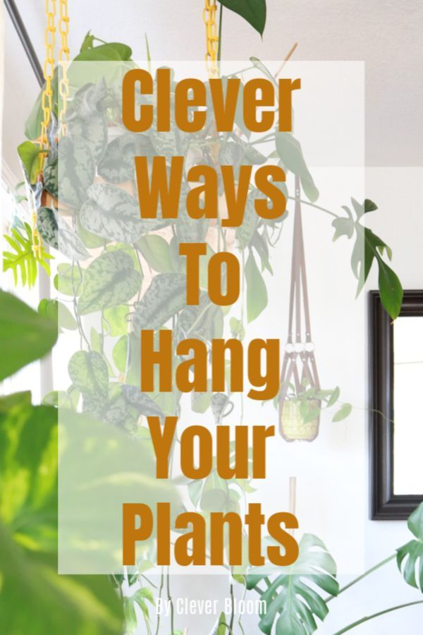 Clever Ways To Hang Your Plants is part of Hanging plants diy, Hanging plants, Plants, House plants indoor, House plants, Plant games - Check out the most clever ways to hang plants in your home! Tons of house plants inspo from some amazing Instagramers  All easy to DIY!