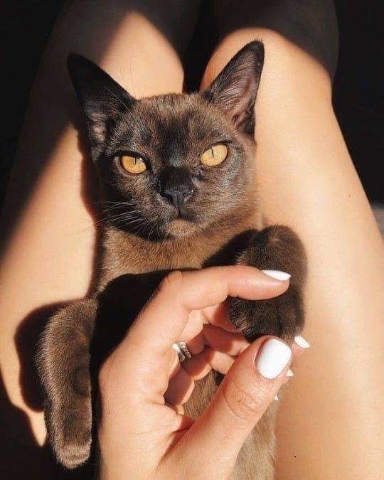 Photo of sαℓσмé єsєrτ gatos mascotas lindas