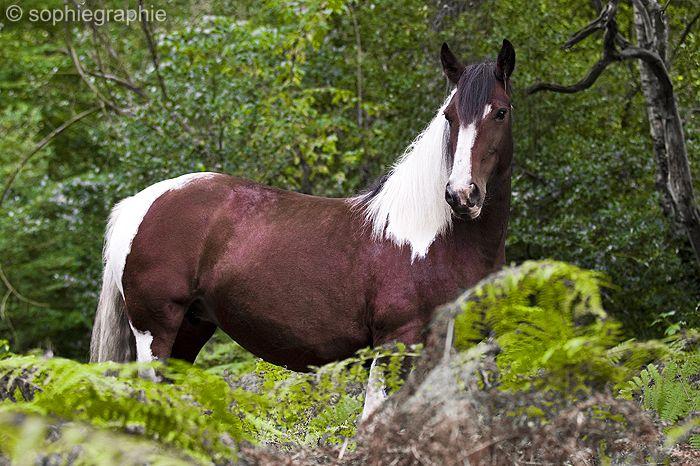 sophiegraphie – individuelle Menschen-/Tier- und Fahrzeugfotografie