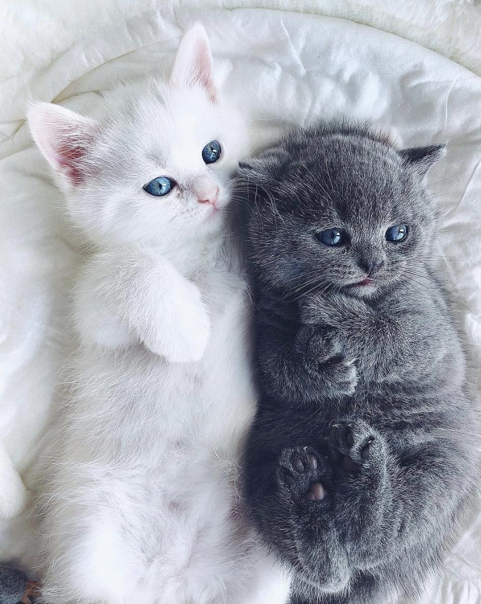 фото красивых кошечек и милых