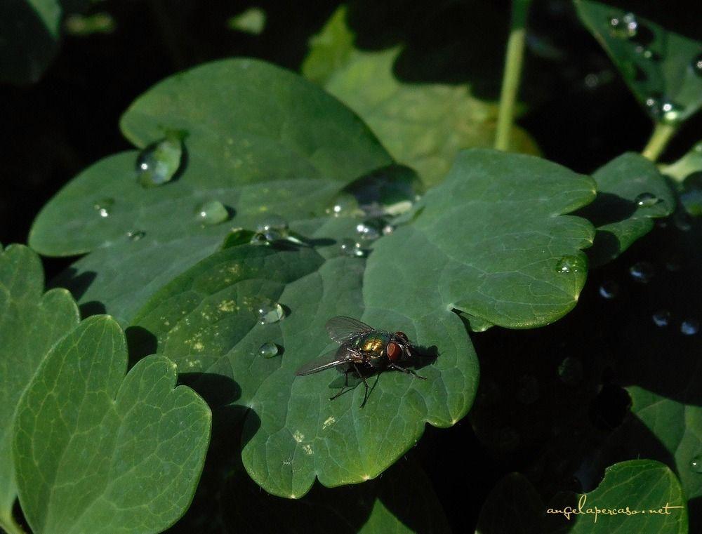 tra le gocce di pioggia www.angelapercaso.net