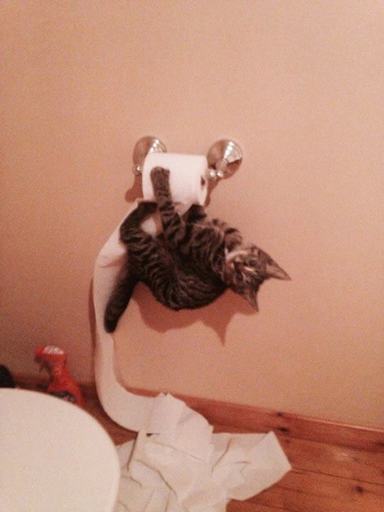 14-katten-toilet-papier-020615-5