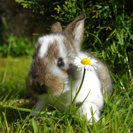 How To Raise Rabbits Rabbit Rabbits Rabbit Bunny Bunnies Raiserabbits Meat Rabbits