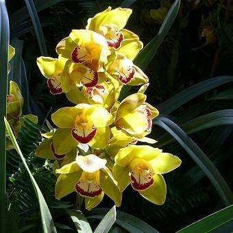 orchidee - Cerca con Google