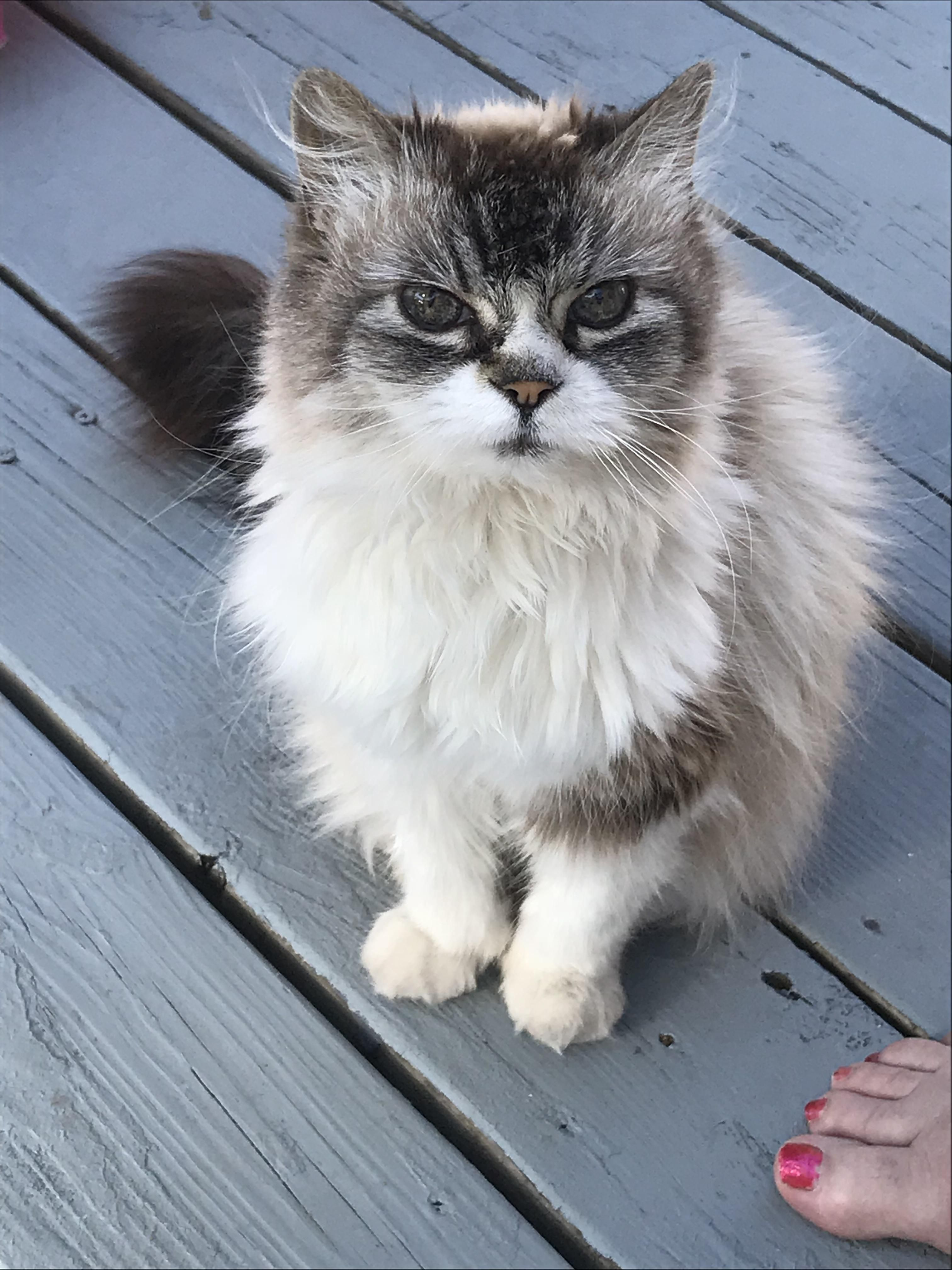My 19 Yo Grumpy Old Lady Funny Looking Cats Funny Animal
