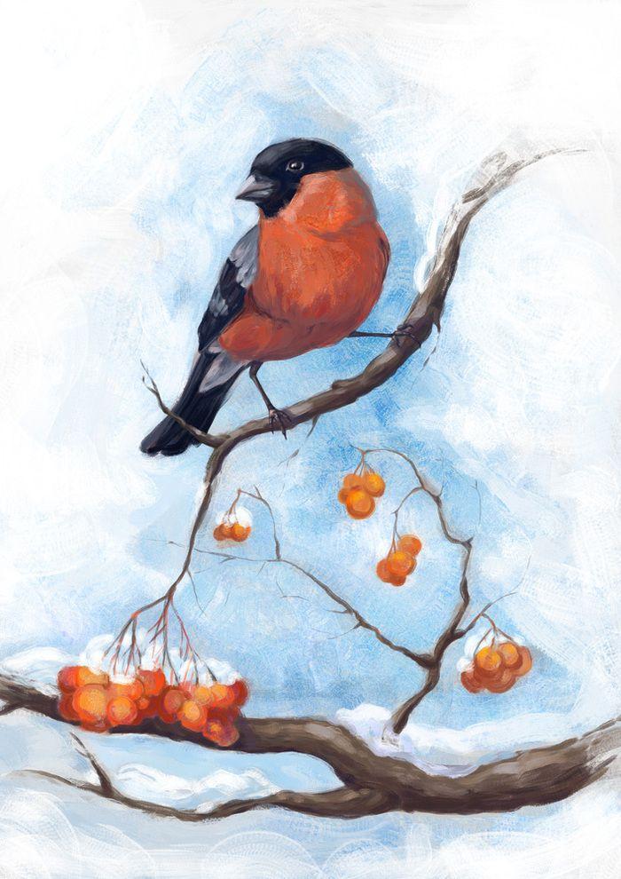 Картинки снегири зимой нарисованные, картинки