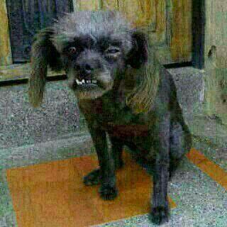 Perro Feo Perros Feos Perros Mascotas Bonitas