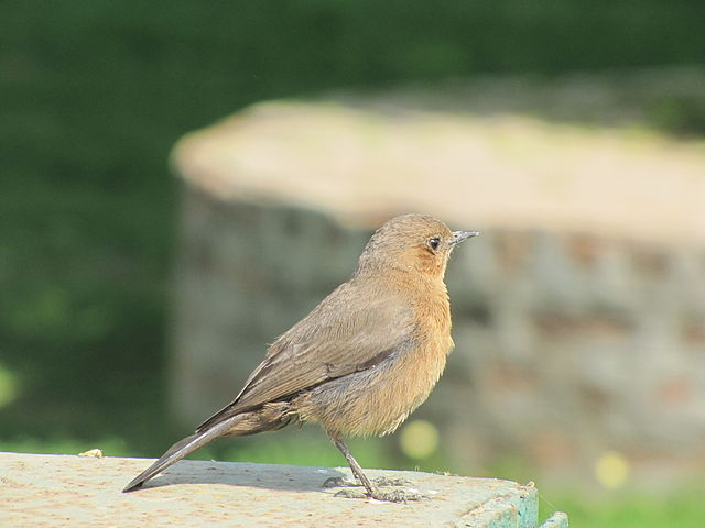 Backyard Bird Identifier   JanielinSmith   Backyard birds ...