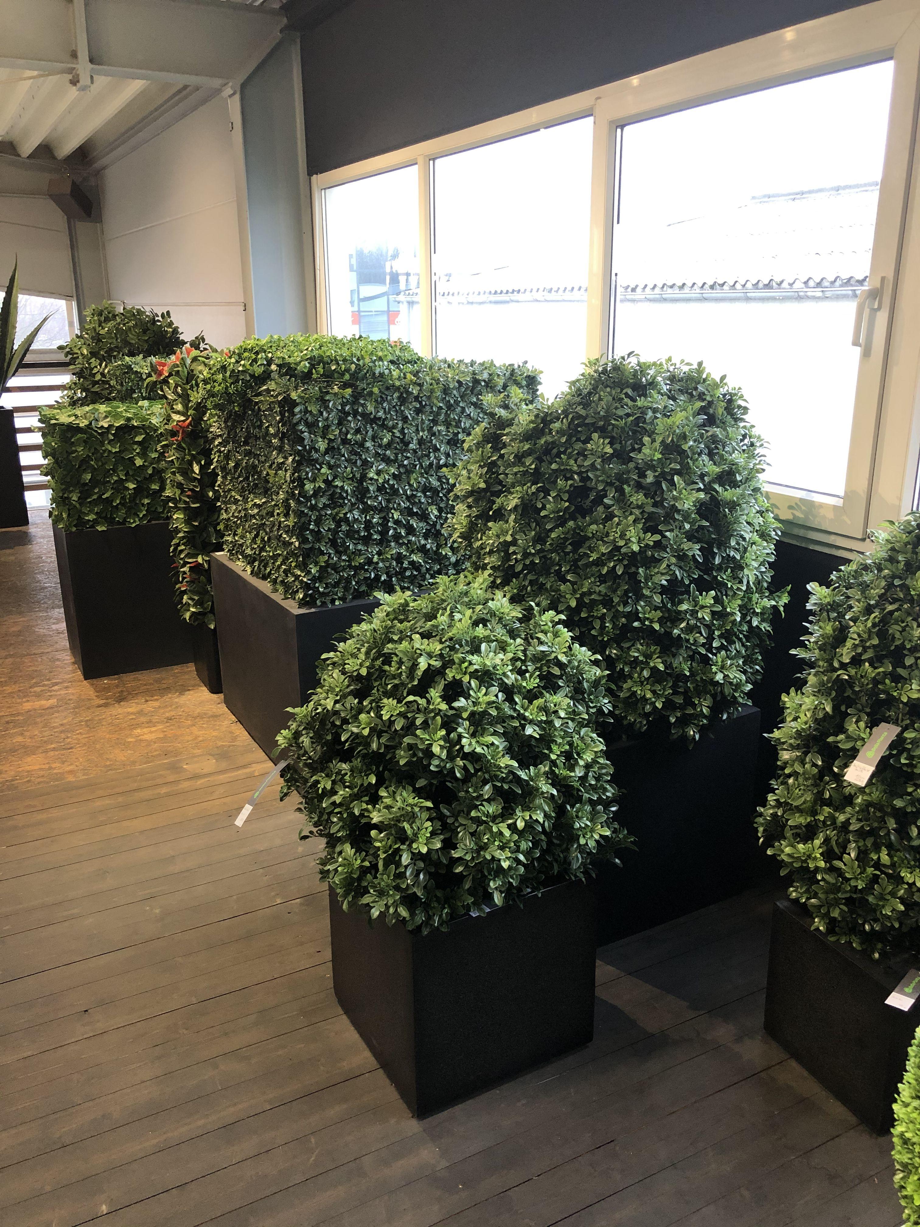 Wetterfeste Ilexpflanzen Kunstlich Sichtschutz Von Bellaplanta