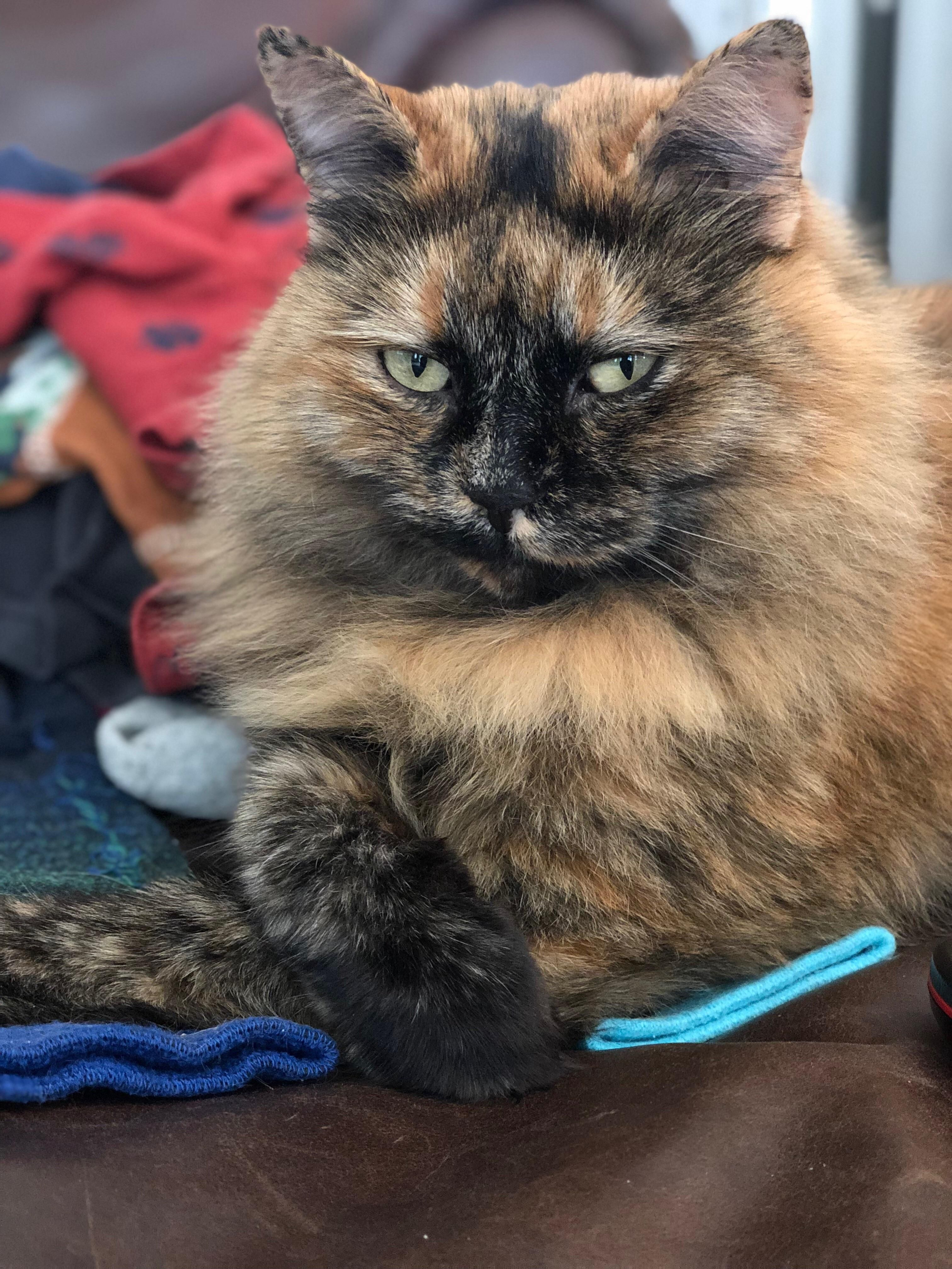 My tortie doesnt care that she is photogenic.