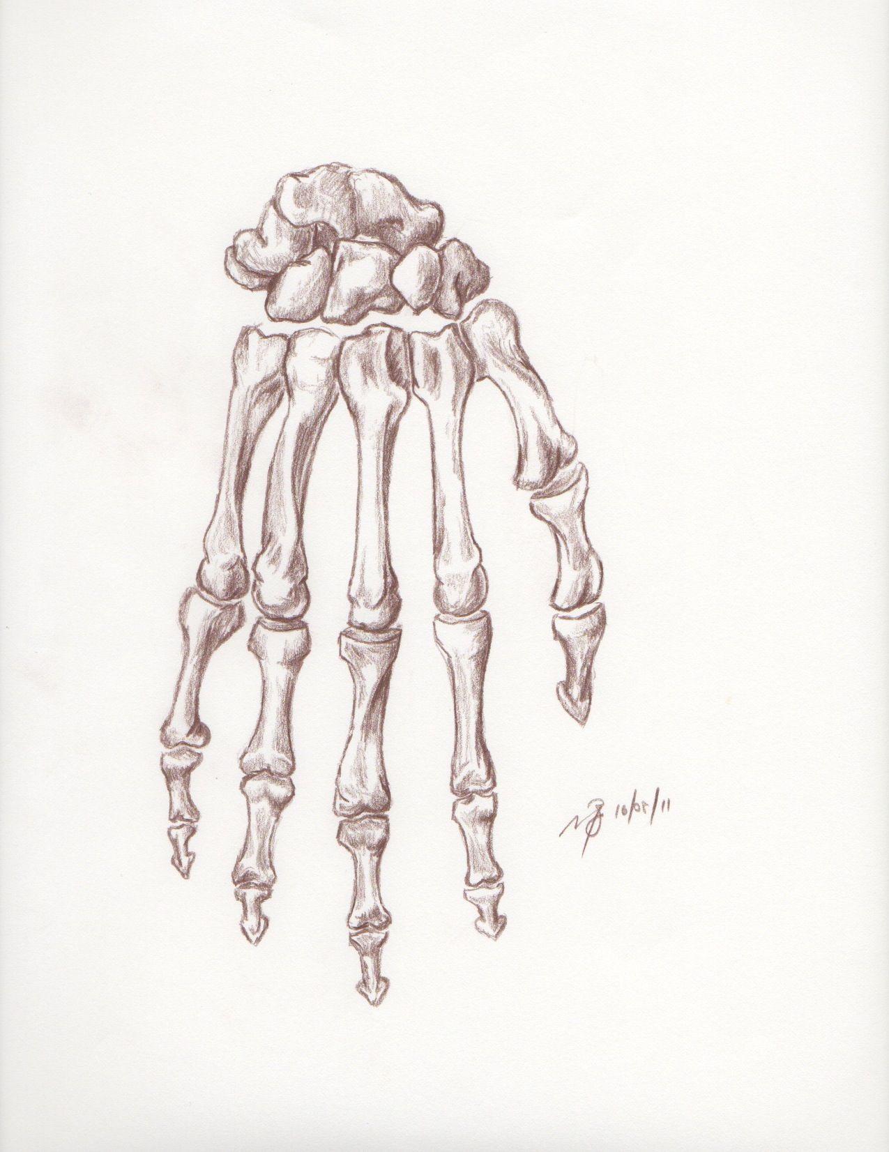 картинка скелет кисти руки зараженная