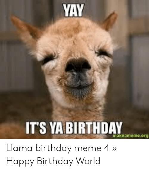 Google Image Result For Https Pics Me Me Yay Its Ya Birthday Makeameme Org Llama Birthday Meme 4 C2 B Funny Birthday Meme Happy Birthday Llama Birthday Meme