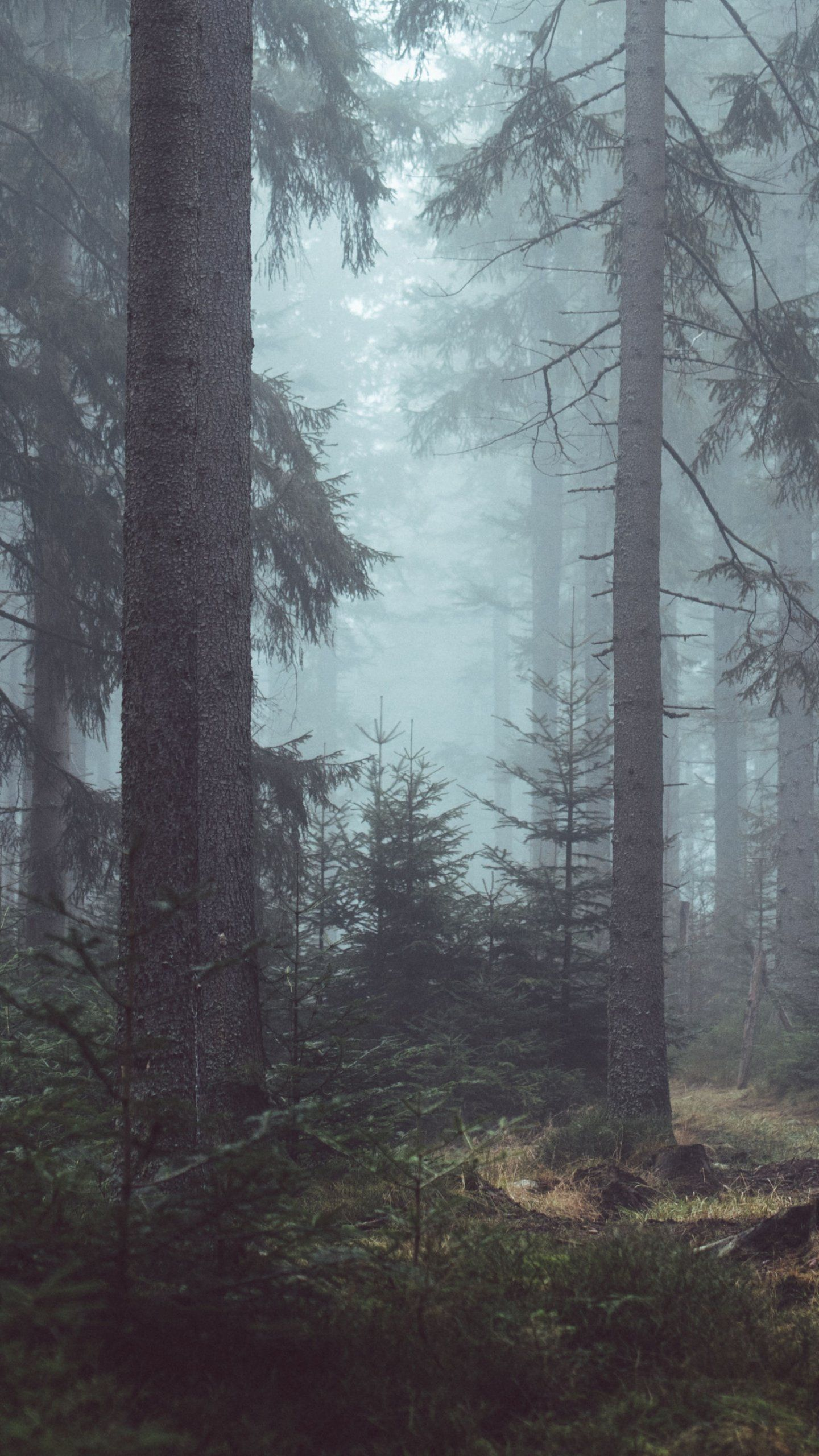 Misty Forest Wallpaper iPhone, Android & Desktop