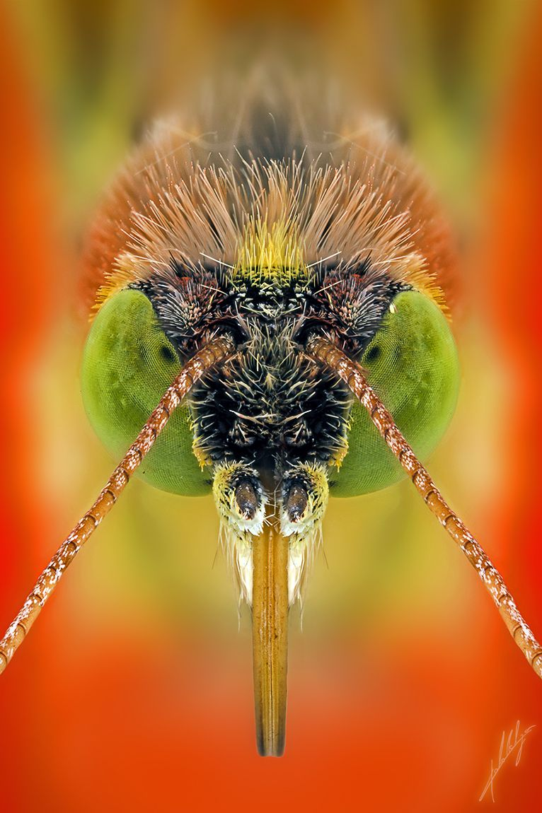 Butterfly Portrait by Paulo Latães