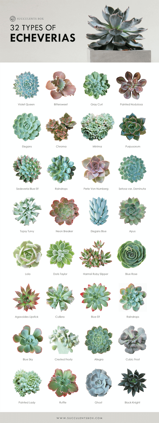 Toxic and Non-Toxic Succulents for Pets