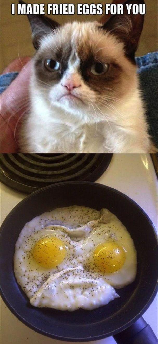 Grumpy Cat Makes Breakfast