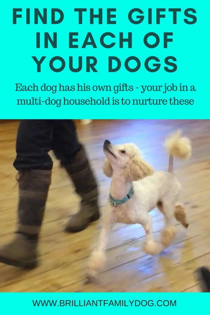 Make Sure Your Easy Going Dogs Get As Much Attention As They Need