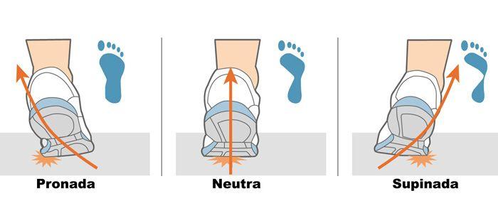 alineación de pie y alteraciones   Ballet Dance Anatomy Physiology ...