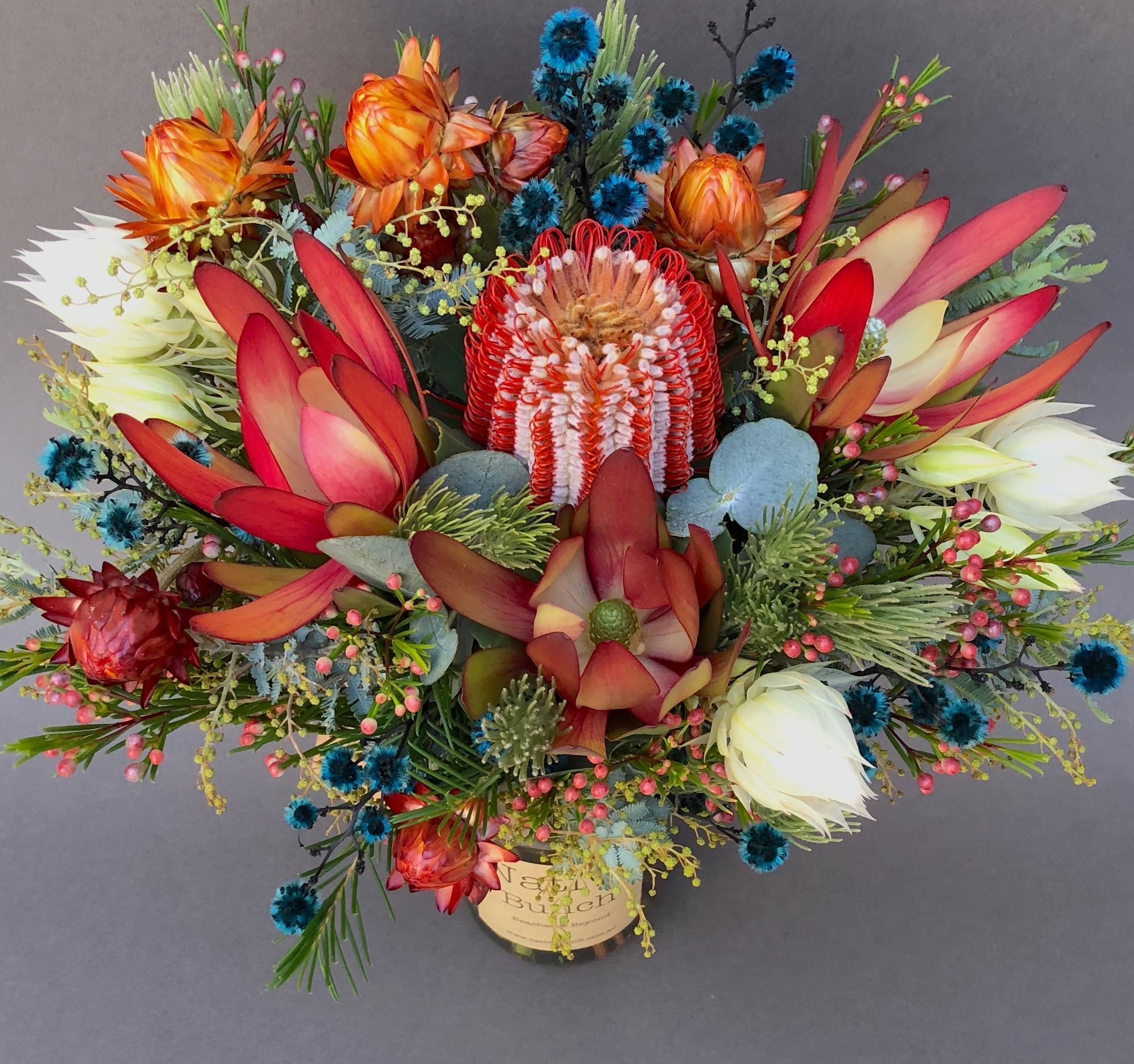 Native flower jar of Banksia coccinea, Protea blushing