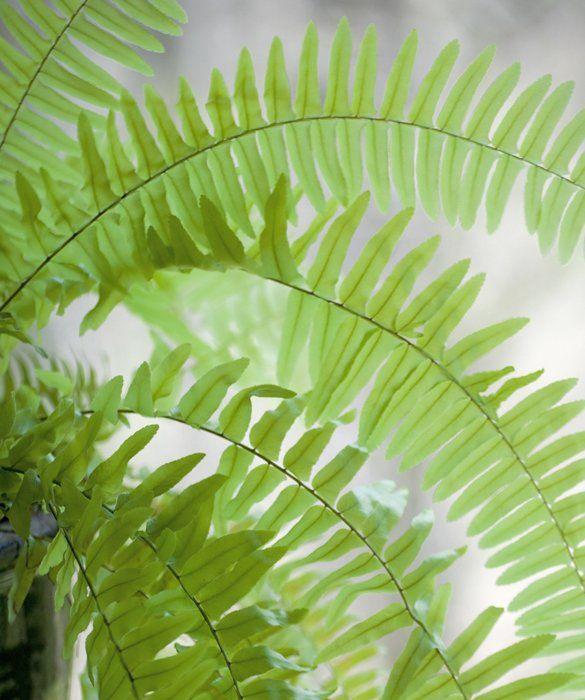 Kid And Pet Friendly Houseplants Houseplants Bathroom Plants House Plants