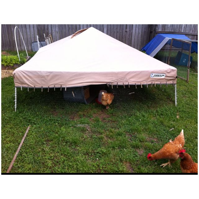 Old canopy with two sections of legs removed wrapped with plastic fencing (staked down with step-in tent stakes and zip-tied to frame at corners and top ...  sc 1 st  Pinterest & Old canopy with two sections of legs removed wrapped with plastic ...