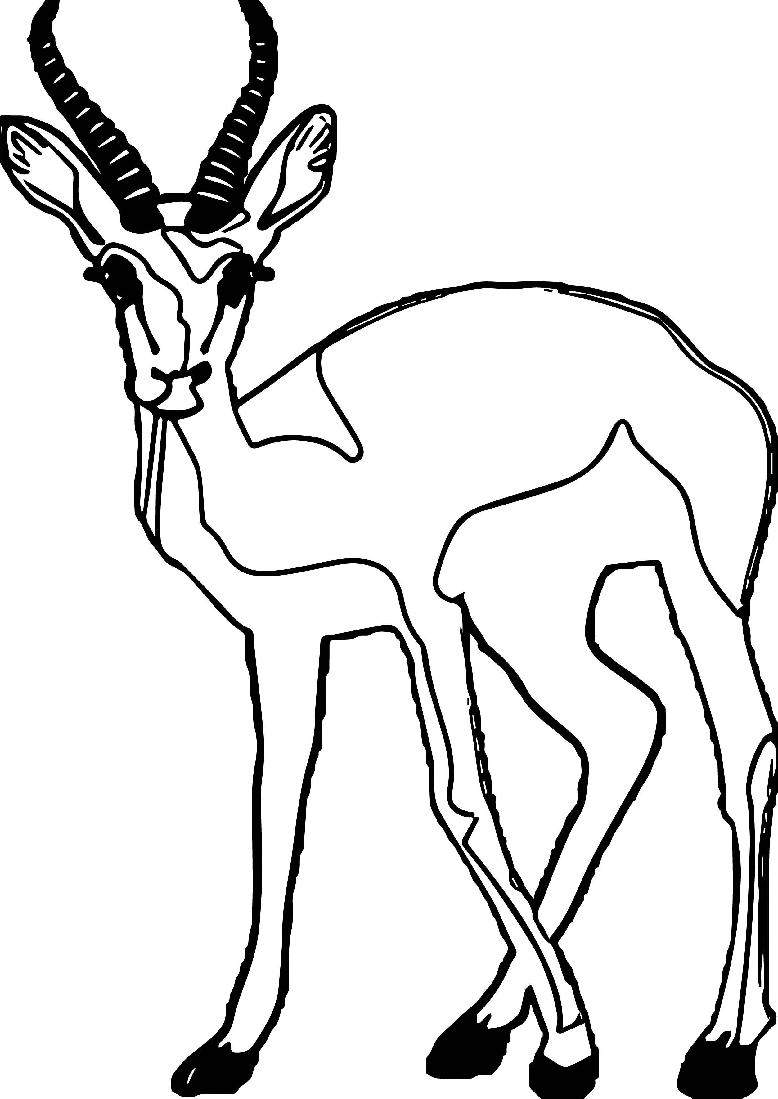Nice Antelope Staring Antelope Coloring Page