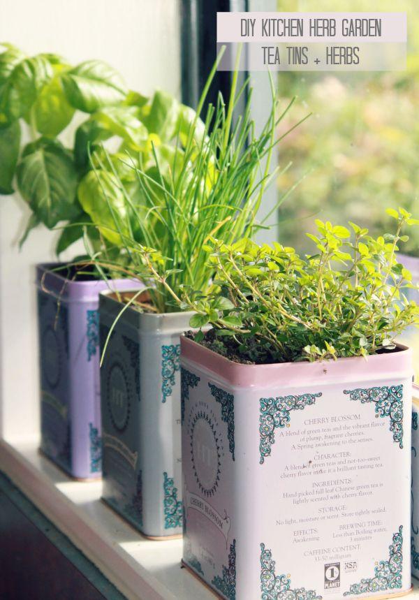Hello Petal Diy Kitchen Herb Garden Herbs Diy Tea Tins 640 x 480