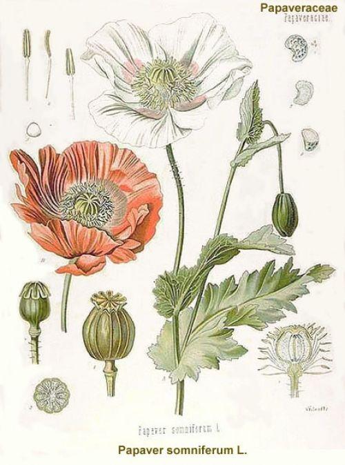 tegninger af blomster - Google-søgning