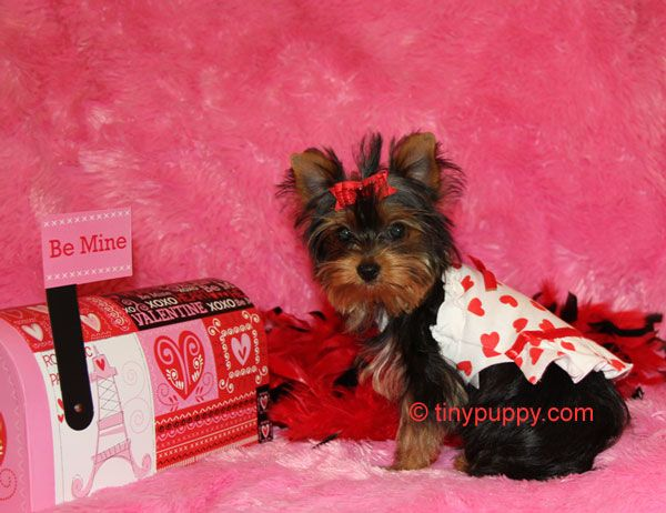 If I Got This For Valentine S Day I D Be Superrr Happy 3
