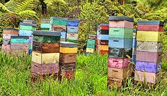 Would love some rainbow beehives like these.
