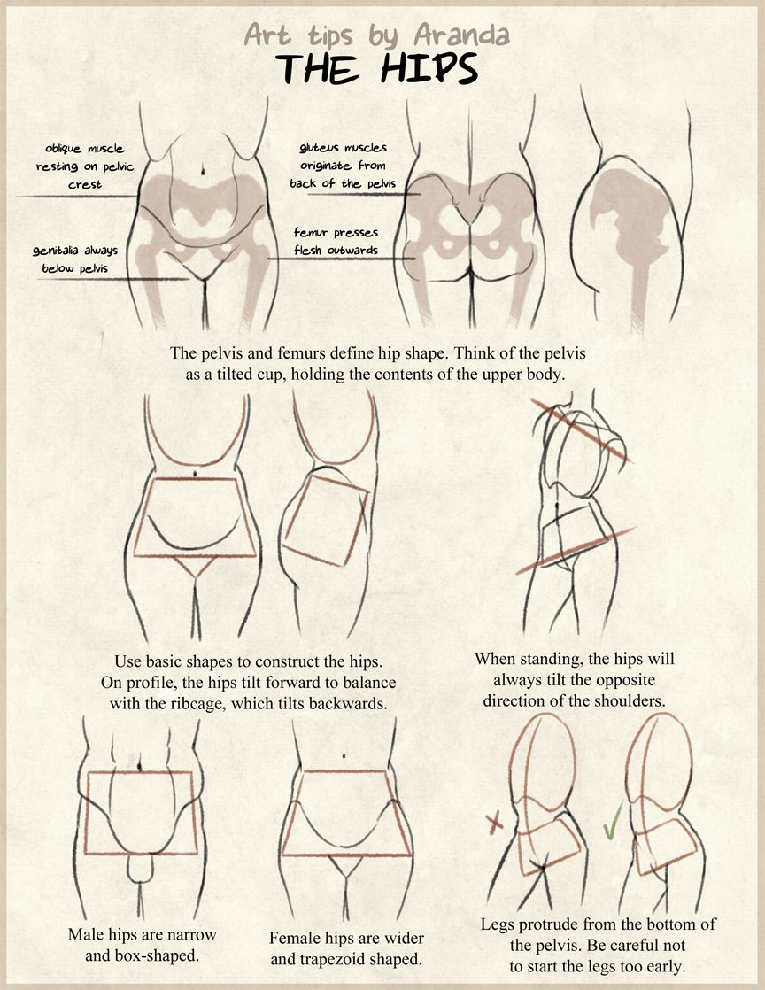5 Tips for Building Muscle! | anatomy | Pinterest | Character design ...