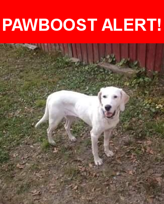 Please spread the word! Bolt was last seen in Rocky Point, NC 28457.    Nearest Address: North Carolina 210, Hampstead, NC, United States