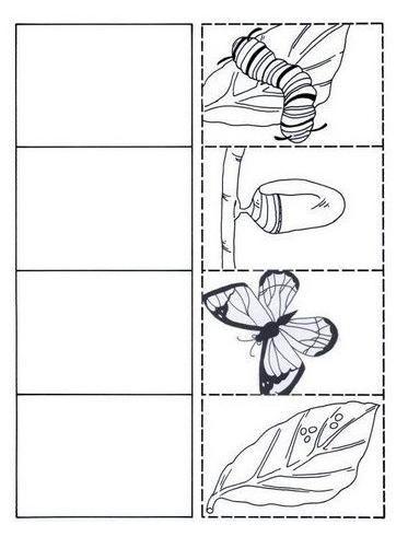 Pin de Elmar en ciclo vida mariposa   Pinterest   Insectos ...