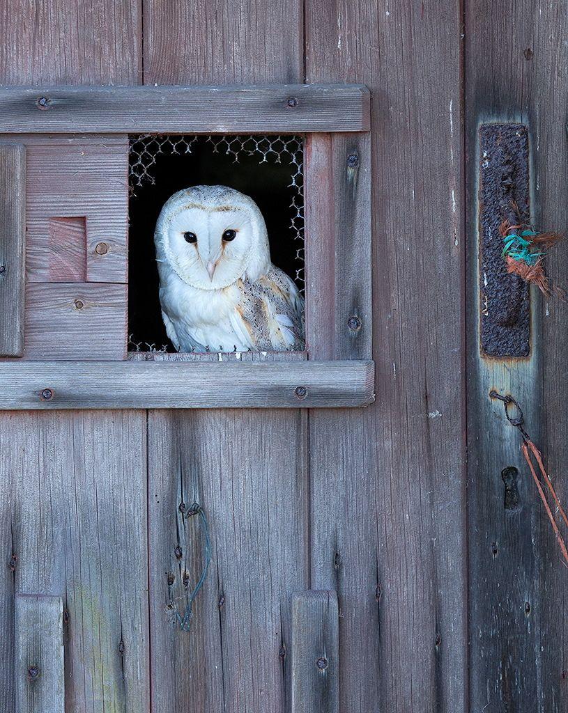 Barn Owl by Ken Hadfeld ARPS DPAGB on 500px | Barn owl ...