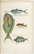 Poissons, écrevisses et crabes de diverses couleurs et figures ... Images Detailed information