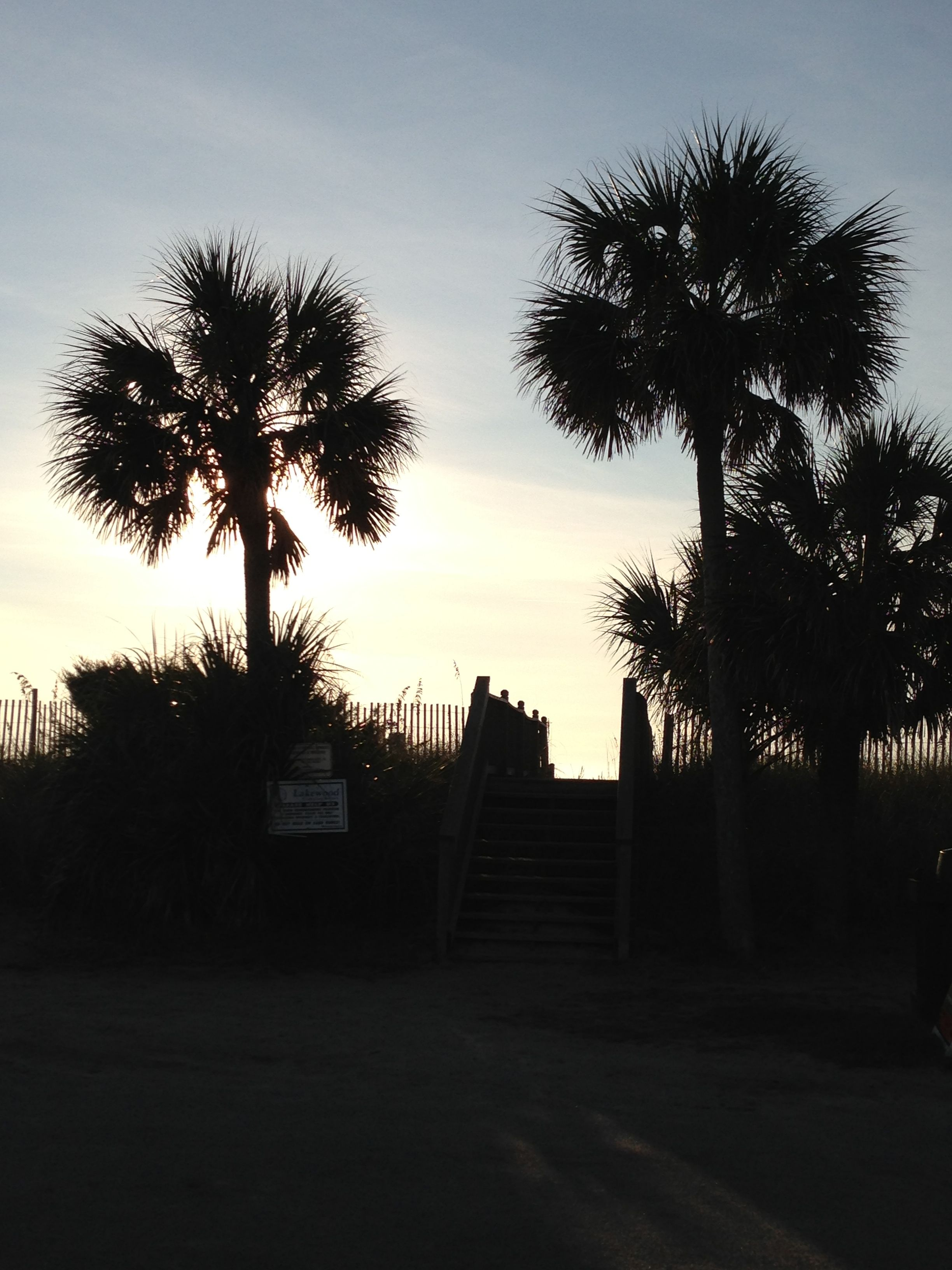 Myrtle Beach Palm Trees