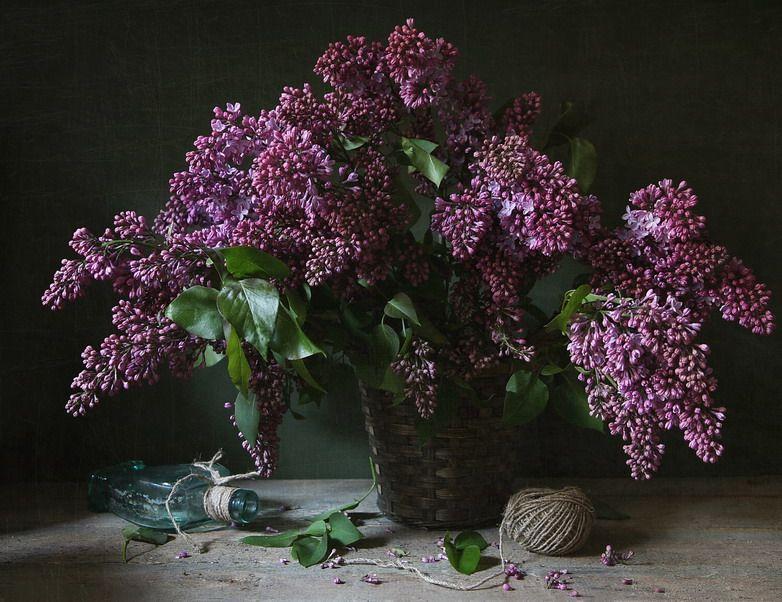 #still #life #photography • photo: Сирень   photographer: katrjunja   WWW.PHOTODOM.COM