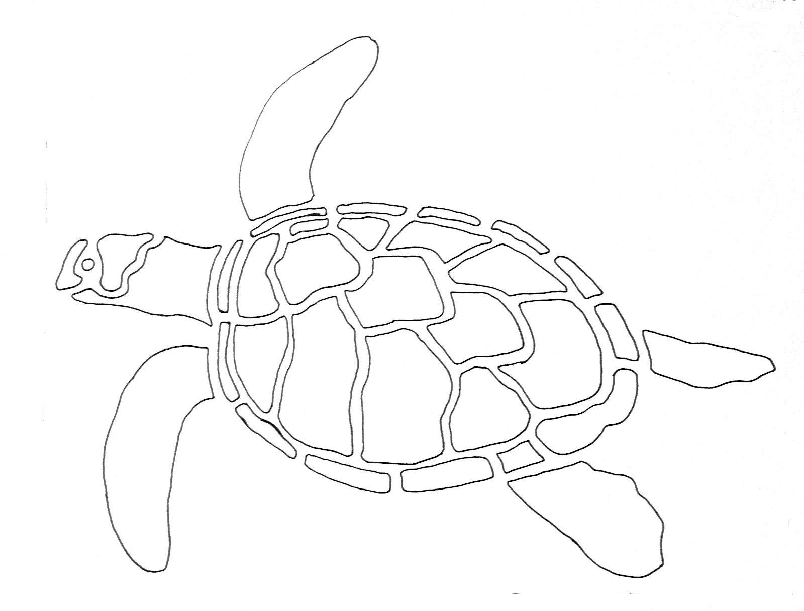 Картинки нарисованные карандашом черепахи