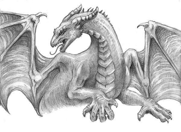 Pencil Drawings Of Dragons
